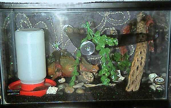Hermie Crabitat Decoration Ideas